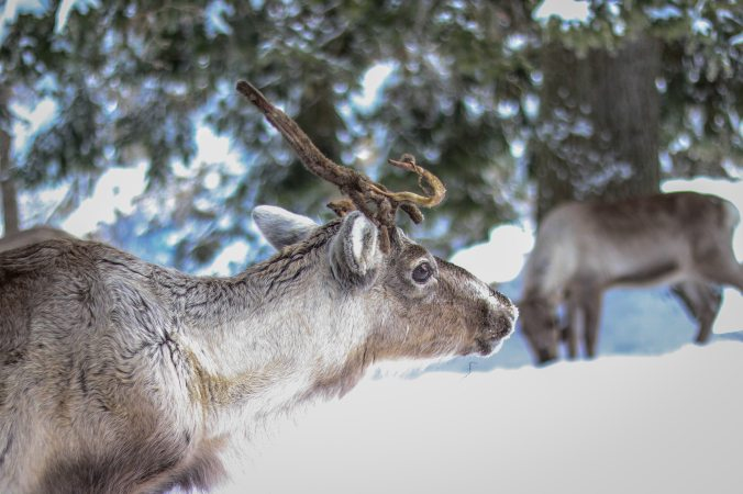 animal-animal-photography-antler-320206 (1)