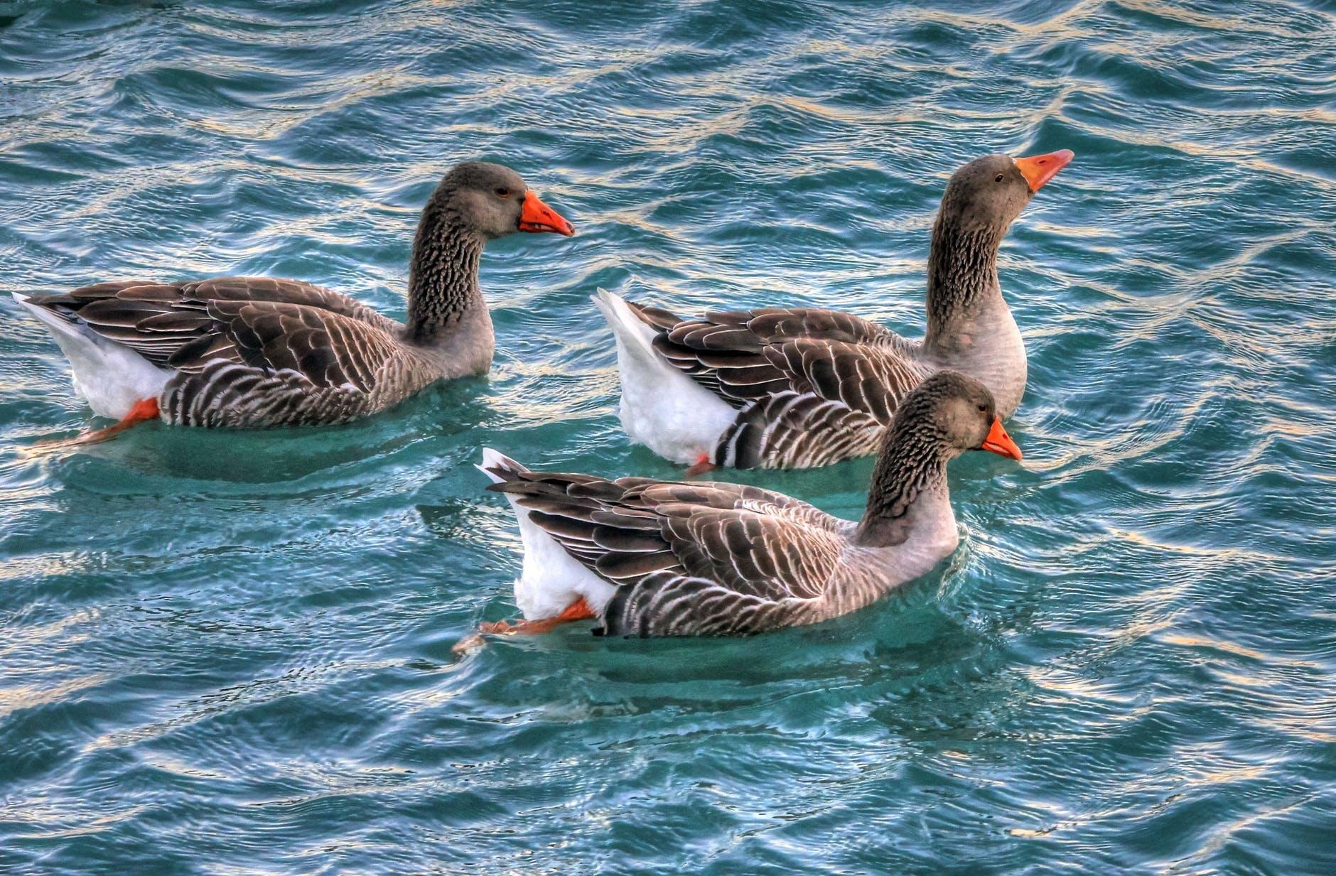 nature water animals birds