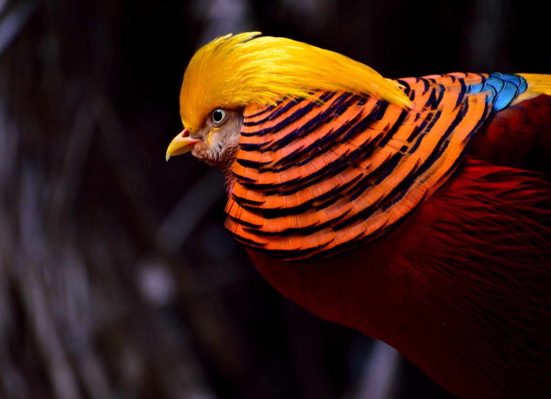 bird colorful wildlife exotic