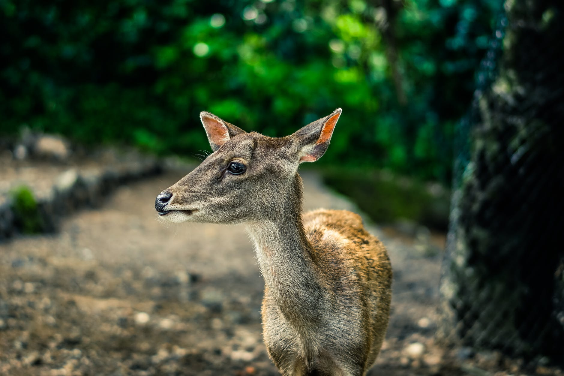 selective focus photography brown doe
