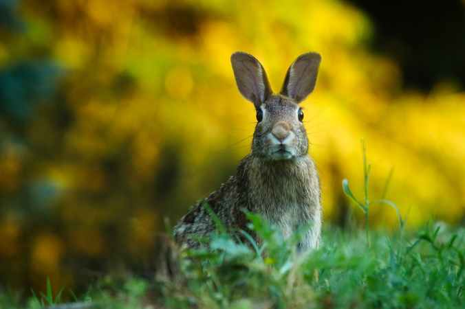 close up of rabbit on field